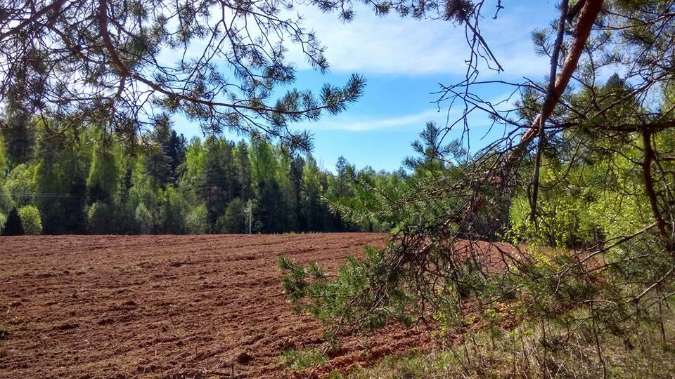 Поле в лесу
